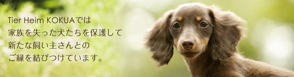 Tier Heim KOKUAでは 身寄りのない保護犬たちをお預かりして 新たな飼い主さんとの ご縁を結びつけています。