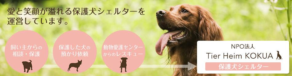 保護犬シェルターについて