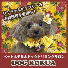 ペットホテル&ドッグトリミングサロン DOG KOKUA